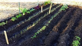 The Beginning | Spring Vegetable Garden