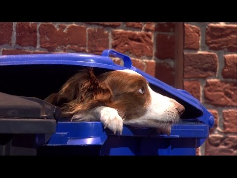 Britain's Got Talent 2015 S09E18 Finals Jules O'Dwyer and Matisse Amazing Dog Routine