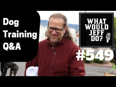 stop-dog-barking-|-training-a-fearful-dog-|-what-would-jeff-do?-dog-training-q-&-a-#549