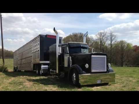 Cow truckin 2013