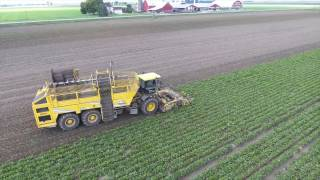 2016 Sugar Beet Harvest with Atwater Farms, Ubly MI
