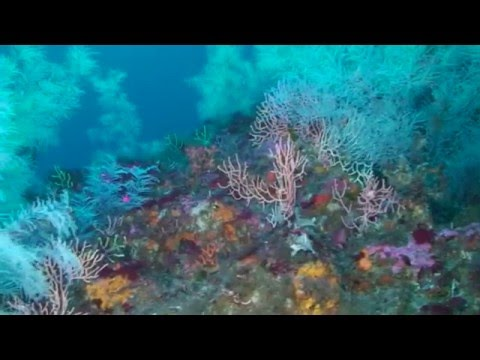 Monitoring of marine biodiversity in Calabria - Mobiomarcal project (2012)