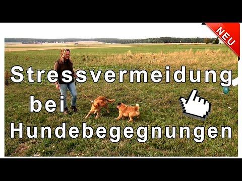 Hundebegegnungen mit und ohne Leine - Stressvermeidung bei Hundebegegnungen !