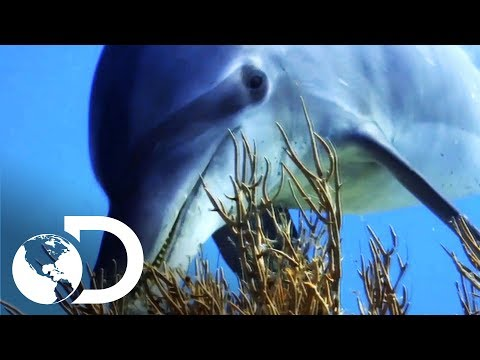 Radiohead y el soundtrack de los océanos | Planeta Azul II