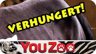 Rettung verwahrloster Pferde │verhungerte Pferde