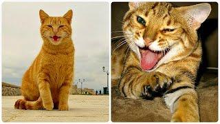 Смешные Кошки 2016! (#18) Веселая Видео Подборка! Смешные Животные 2016/