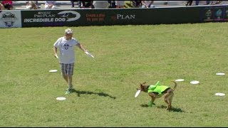 Full Freestyle Flying Disc Competition - 2017 Purina® Pro Plan® Incredible Dog Challenge® Eastern
