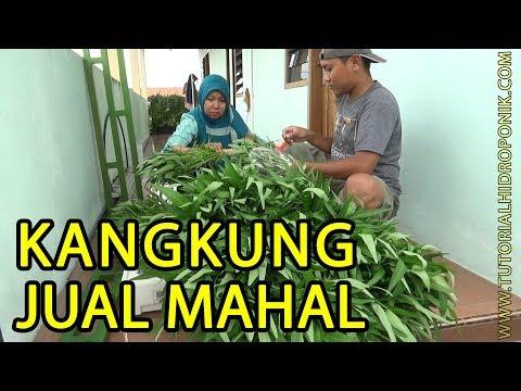 Cara Jual Kangkung Harga Supermarket