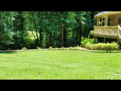 Arbor-Nomics: How to Manage Zoysia Grass
