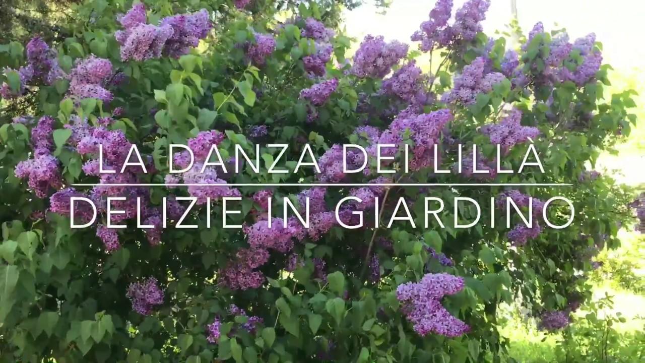 Albero Di Lillà la danza dei lillà | delizie in giardino