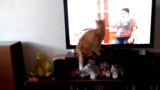Кот нашел любимую передачу