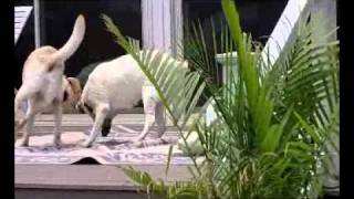 Club Med For Dogs.wmv