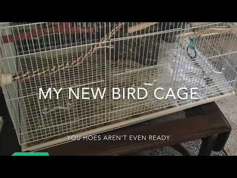 My Bird Cage
