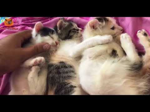 3 Adorable Cute kittens Sleeping Together   Cats and Kittens Video