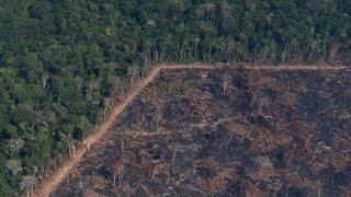 Lumea Fara Padurea Amazoniana