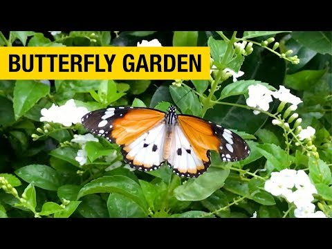 Butterfly Garden at Singapore Changi International Airport