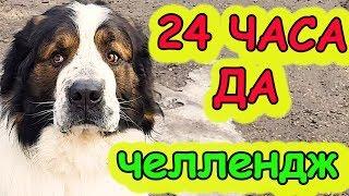 24 ЧАСА ДА! Человечиха говорит только ДА. Московская сторожевая Булат Говорящая собака