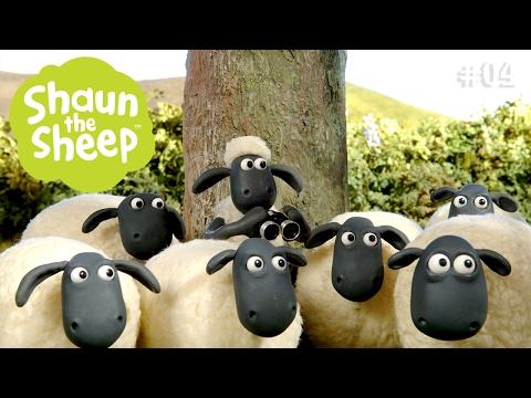 Timmy tập xiếc - Những Chú Cừu Thông Minh