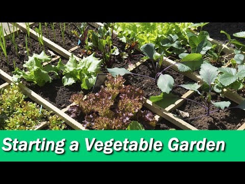 Starting A Vegetable Garden With 5 Helpful Tips