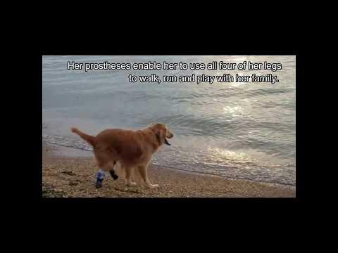 My Pet's Brace Blog | Leg braces and prosthetics for pets