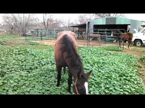Horses Love the spotlight. In China Grove, Texas