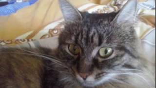 Любимая кошка умерла,в ее честь монтажик.