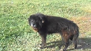 Странная собака в Вологде - финал
