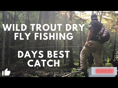 WILD Trout Dry Fly Fishing
