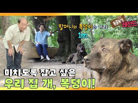 [TV 동물농장 레전드]