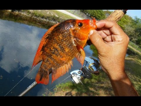 The Red Devil canal with Penfishingrods.com