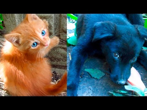 Kittens playing and feral puppy eating chicken fillet