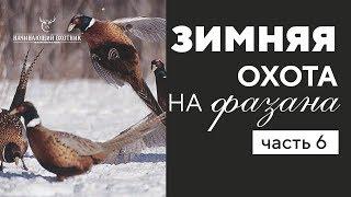 Лучшие моменты с зимней охоты на фазана #часть 6
