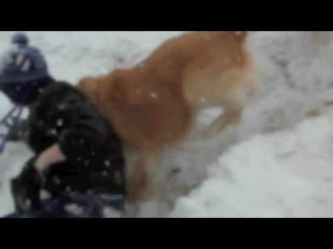 Dog Attack  Warning! Graphic Video!