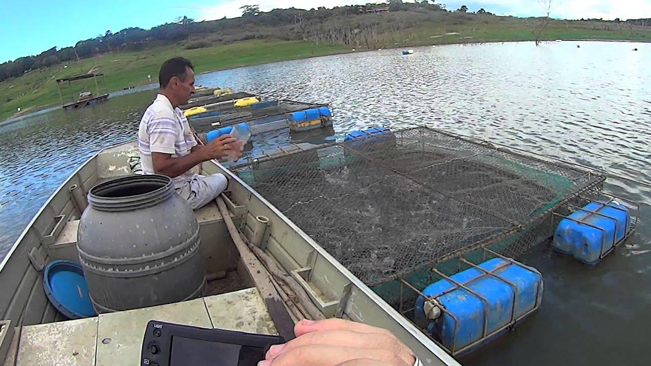 Cria o de tilapias em tanque rede youtube for Tanques para cria de tilapia
