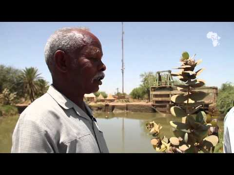 SUDAN : GEZIRA PROJECT