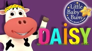 Learn with Little Baby Bum | DAISY | Nursery Rhymes for Babies | Songs for Kids