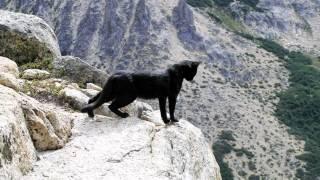 Emilio, Rey del Valle Frey - HD