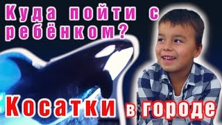 Смотреть видео Куда сходить с ребенком? Сходить с ребенком в Москвариум на ВДНХ. Косатки. Шоу.Видео для детей. онлайн