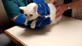 Unhappy Cat 2.0