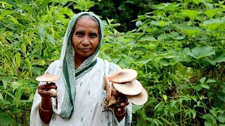 Village Food- Natural fresh Big Mushroom Cooking by Grandmother - Delicious and Traditional Recipe