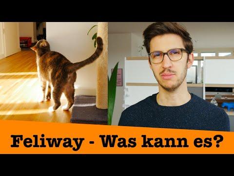 Feliway - Was kann es? Was nicht?