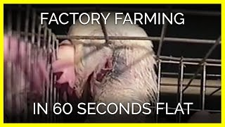 Factory Farming in 60 Seconds Flat | Jesus People for Animals