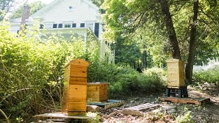 Beekeeping mindfully in nature with the Flow Hive