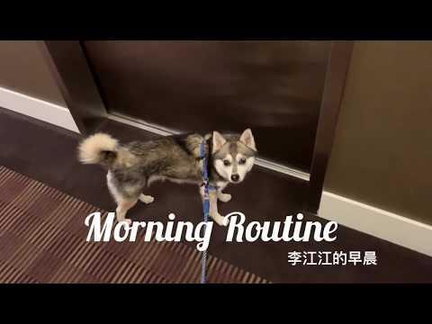 DOG MORNING ROUTINE 🌞🐺|| Alaskan Klee Kai