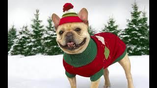 Собаки в одежде / собаки в одежде такие смешные