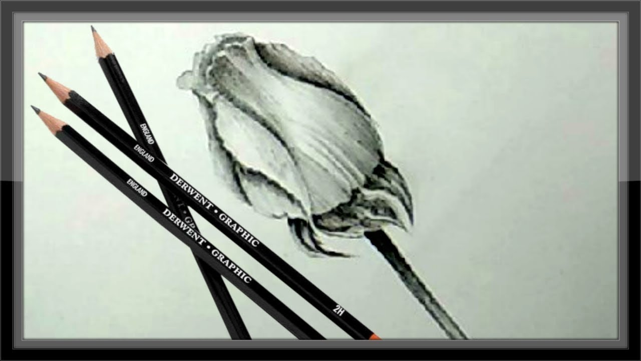 Simple Pencil Drawing Rose Flower Step By Step Easy - YouTube