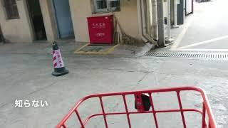 激おこの中国語ーサイクリング中の悲劇