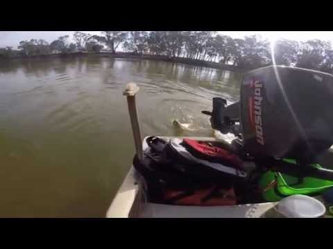 Fishing On The Murray In Barmah