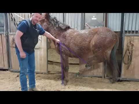 Mule Training- Stop Kicking