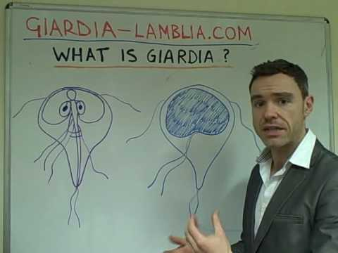 What Are Giardia Lamblia & Giardiasis?
